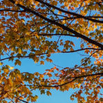 foglie-rosse